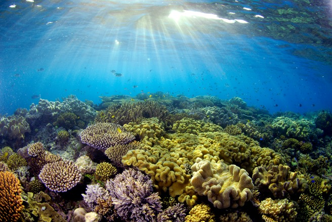 Sunlight illuminates the coral at the Great Barrier Reef.